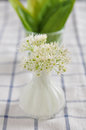 Fresh wild garlic leaves with flowers Royalty Free Stock Photo