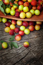 Fresh wild plum Royalty Free Stock Photos