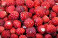 Fresh wild strawberries close up of free delicacy from the scandinavian forests Stock Photo