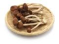 Fresh willow tea tree mushrooms Royalty Free Stock Photo