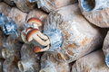 Fresh yanagi mushroom in plastic bags Stock Photo