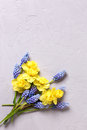 Fresh yellow and blue spring flowers on grey textured backgroun