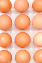 Fresh yellow chicken eggs in container Royalty Free Stock Images