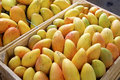 Fresh yellow mangos boxes with delicious mangoes oaxaca market mexico Royalty Free Stock Image