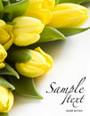 Fresh yellow tulips Stock Photography
