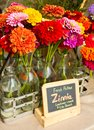 Fresh Zinnias for Sale Stock Image