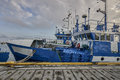 Freshly caught fish ( Cod fish ) is unloaded from a fishing boat Royalty Free Stock Photo