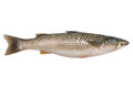 Freshly caught sea fish Mullet Royalty Free Stock Photo