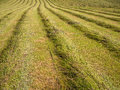 Freshly cut grass in a field lines of mown farm Stock Image