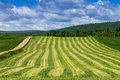 Freshly cut hay field Royalty Free Stock Photo