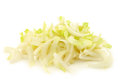 Freshly cut pieces of chicory on a white background Stock Image