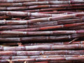 Freshly cut sugar cane Royalty Free Stock Photos