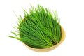 Freshly cut wheatgrass closeup of in a wooden bowl isolated on white background Royalty Free Stock Photography