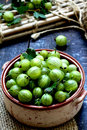 Freshly gooseberry picked from the garden Royalty Free Stock Photos