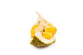 Freshly harvested durian fruit with aromatic and delicious golden yellow soft flesh Royalty Free Stock Photography