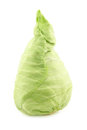 Freshly harvested green pointed cabbage on a white background Stock Image