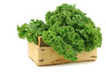 Freshly harvested  kale cabbage in a wooden crate Royalty Free Stock Image