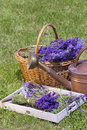 Freshly harvested lavender picked in a wicker basket on a wooden tray Stock Photography
