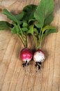 Freshly harvested radishes picked red radish on a wooden chopping board Stock Photography