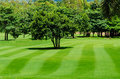 Freshly mown lawn and trees in a golf course green Stock Images