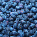 Freshly picked blueberries Stock Photo