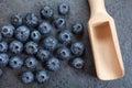 Freshly picked blueberries Royalty Free Stock Photo