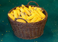 Freshly picked  corn cobs on the farm Royalty Free Stock Photo