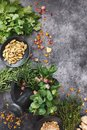 Freshly picked culinary herbs in a  mortar