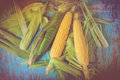 Freshly picked ear of maize, sweet corn cob Royalty Free Stock Photo