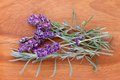Freshly picked lavender flowers from the garden Royalty Free Stock Photos