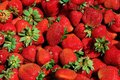 Freshly picked of red strawberries tasty background Royalty Free Stock Images