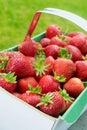Freshly picked strawberries Stock Photos