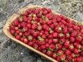 Freshly picked strawberries Royalty Free Stock Image