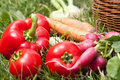 Freshly picked vegetables gardening organic Stock Image