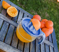 Freshly squeezed oranges Royalty Free Stock Photos