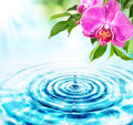 Freshness concept drops in water and pink orchids Royalty Free Stock Photo