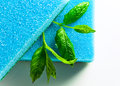 Freshness and purity blue sponge leaves of peppermint on white reflexive background Royalty Free Stock Photo