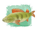 Freshwater fish color drawing Royalty Free Stock Photo