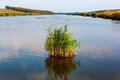 Freshwater lake and vegetation still with green floating Royalty Free Stock Image