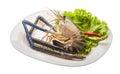 Freshwater prawn Royalty Free Stock Photo