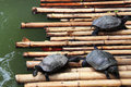 Freshwater turtles Royalty Free Stock Photo