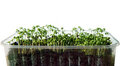 Fress green cress Stock Images