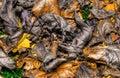 Färgrika autumn leaves background i hdr high dynamic range Arkivbilder