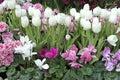Frühlingsblumengarten Stockbild