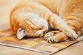 Fridsamma orange röda tabby cat male kitten sleeping Royaltyfri Fotografi