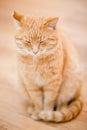 Fridsamt orange rött tabby cat male kitten sleeping at hem på la Royaltyfri Foto