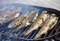 Fried barbecue grill trout fresh fish Stock Image