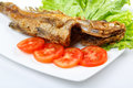 Fried fish closeup over white Royalty Free Stock Photography