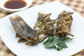 Fried giant water bug on dish Royalty Free Stock Photo
