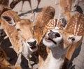 Friendly Deer Royalty Free Stock Photos